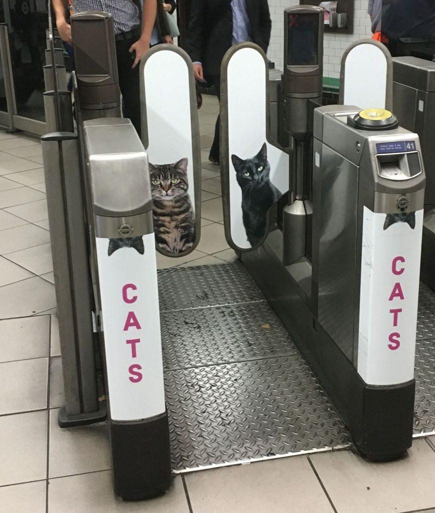 Clapham cats 1
