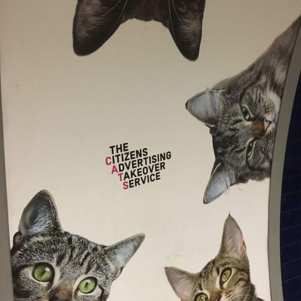 Clapham cats 2